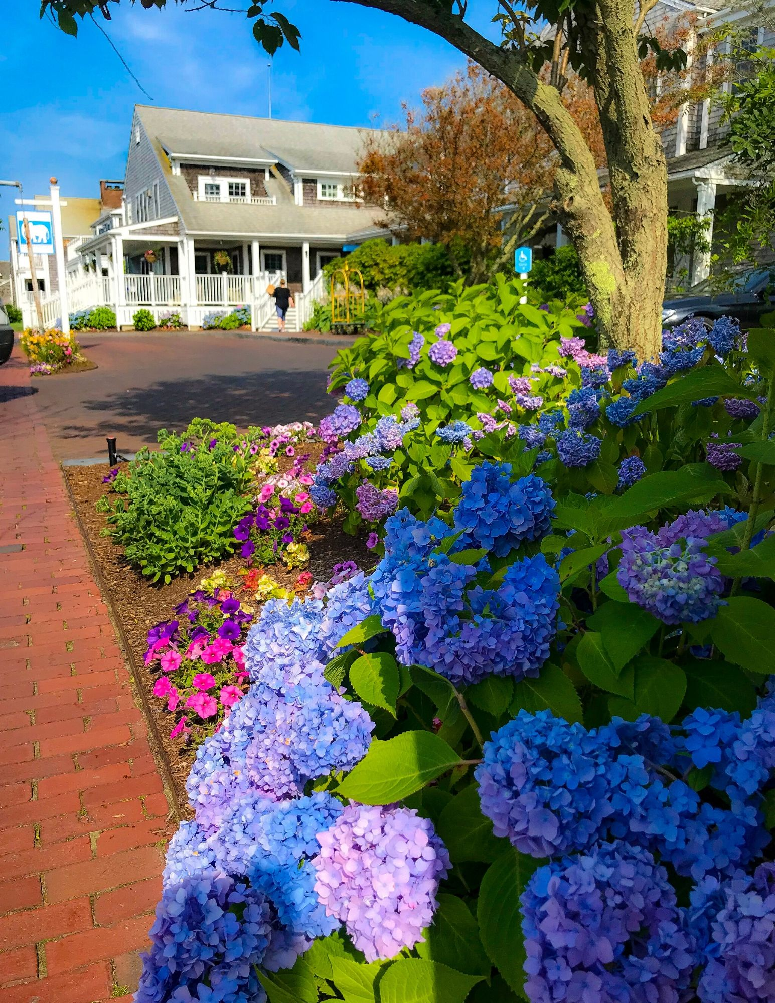 Nantucket Hydrangeas-18