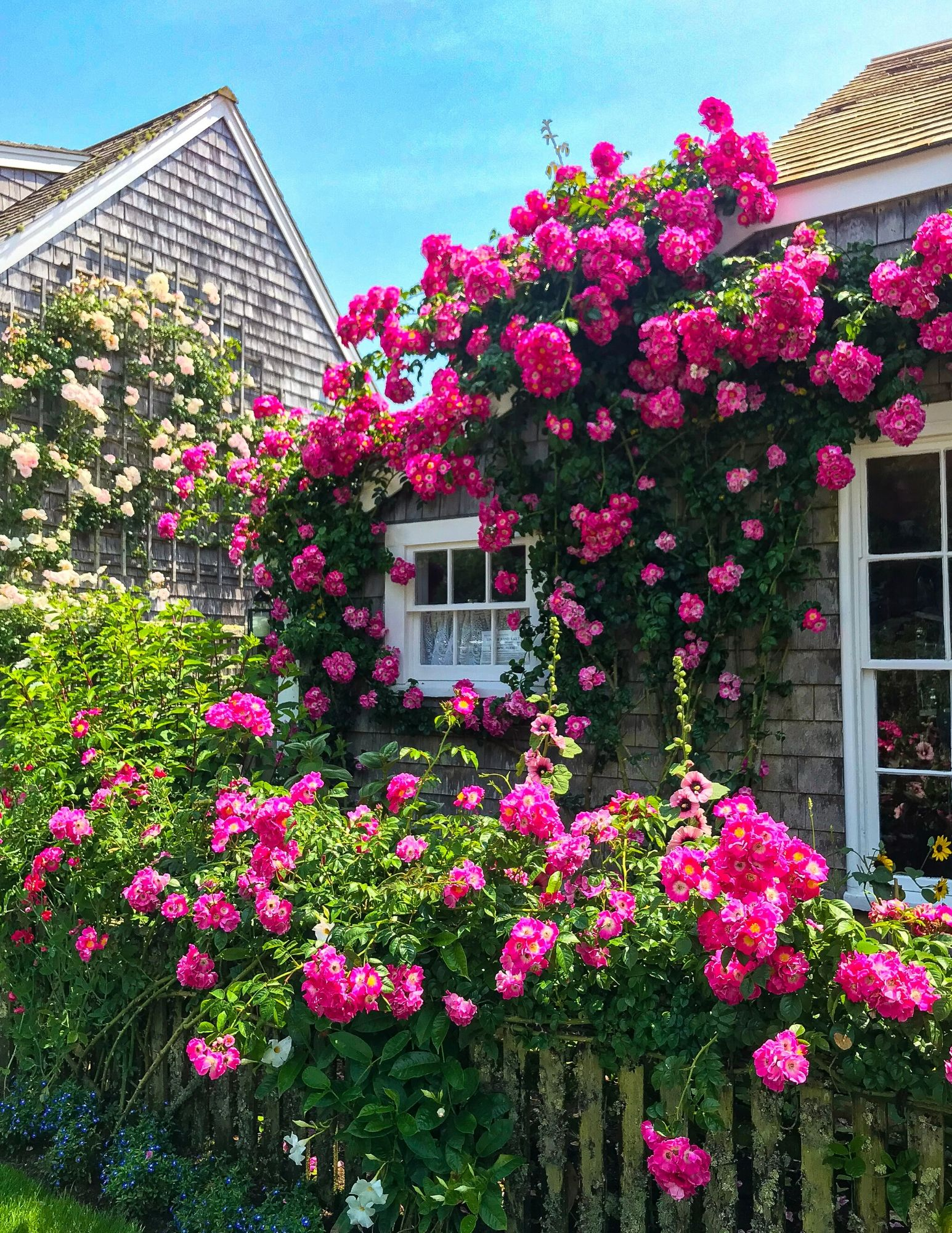 Nantucket Rose Covered Cottages in Sconset-10