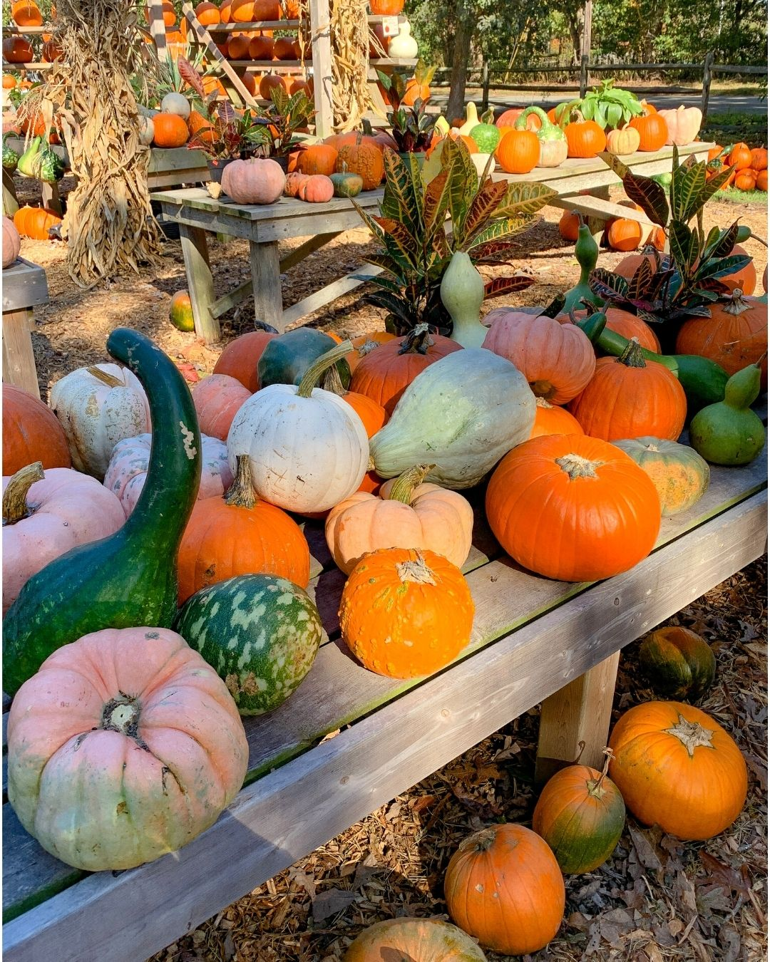Morning Glory Farm Marthas Vineyard-16