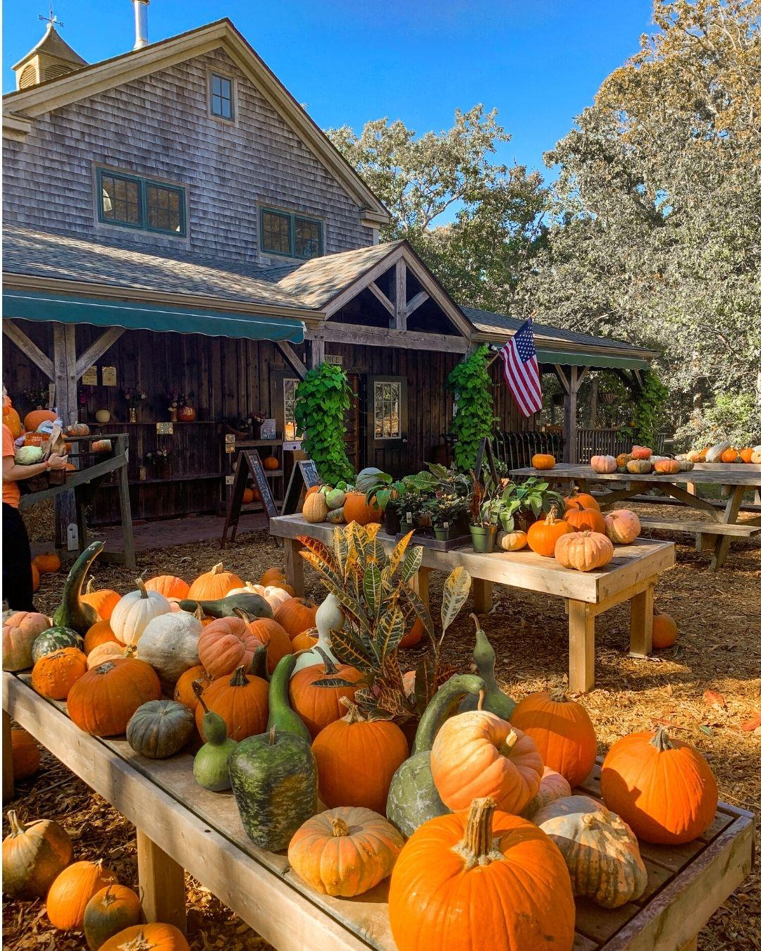 Morning Glory Farm Marthas Vineyard-18