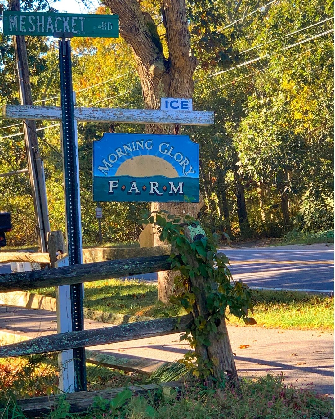 Morning Glory Farm Marthas Vineyard-4