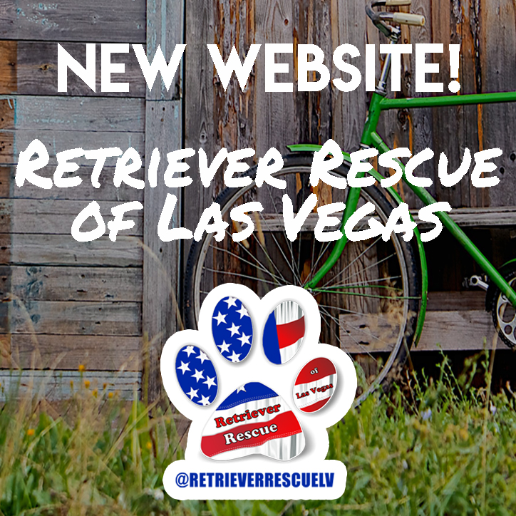 Retriever Rescue of Las Vegas