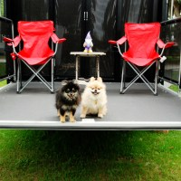 The Best Way to Train a Puppy - In an RV