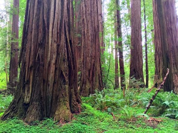 redwood-highway-27