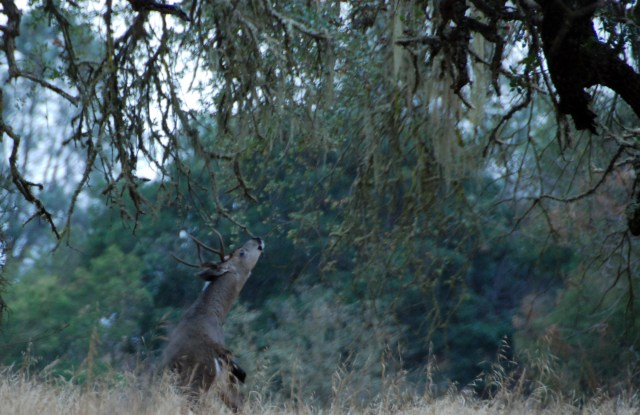 wildlife-wednesday-this-was-taken-steps-away-from-our-rv