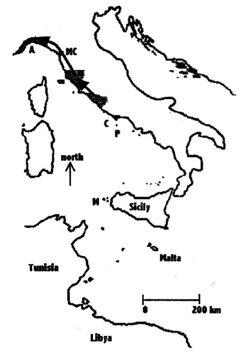 AGOSTINI N, BAGHINO L, COLEIRO C, CORBI F, PREMUDA G. 2002
