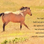 xp3-dot-us_DSC_3285 horse_xp3-dot-us (I AM, the Lord, your God)