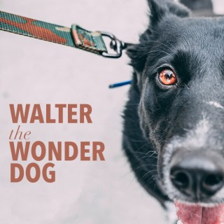 Walter the Wonder Dog