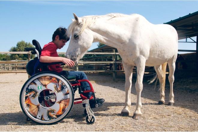 Terapia asistida con caballos