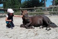 Baby Pony en S'Hort Vell