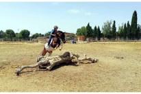 TREC - escuela de equitación S'Hort Vell