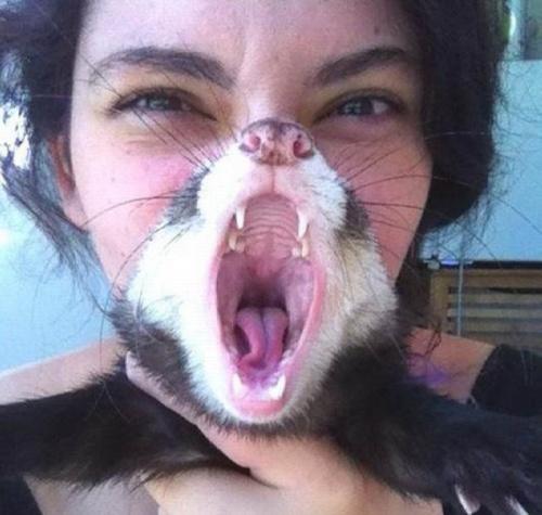 Pisica-barba