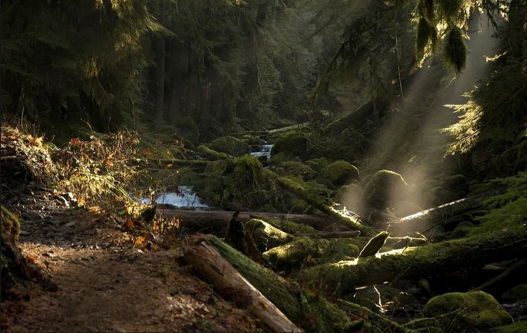 Larch-Mountain-Oregon