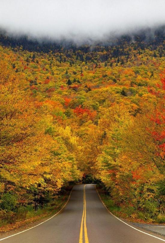 Tunelul de copaci de toamna in Vermont, SUA