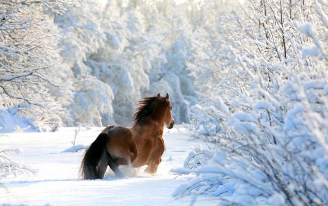 iarna13