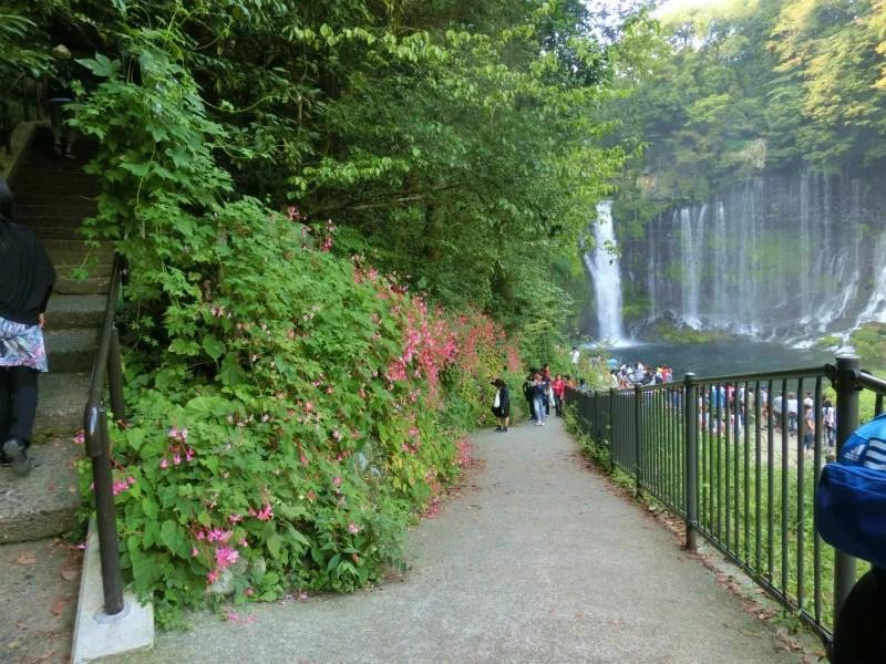 シュウカイドウ 白糸の滝