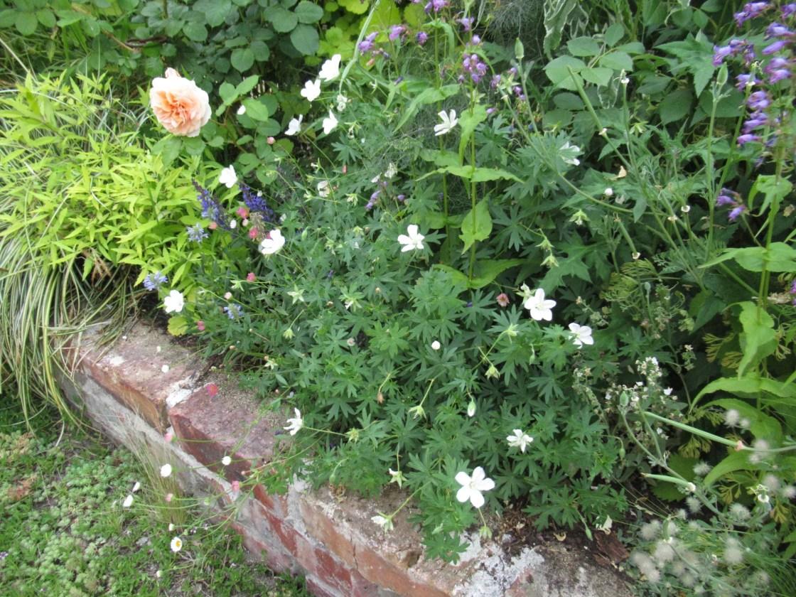 花壇に植えると良い白花の植物。