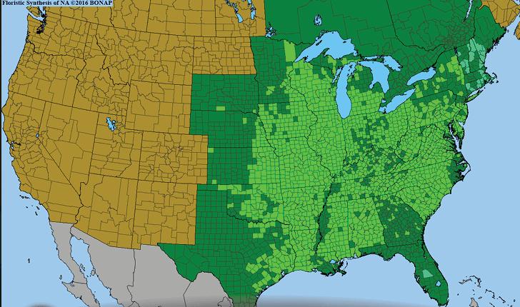 ユーフォルビア・コロラータの自生地分布図