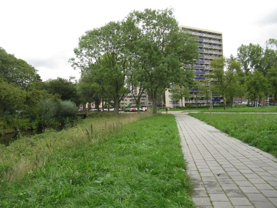 echium vulgare in Holland