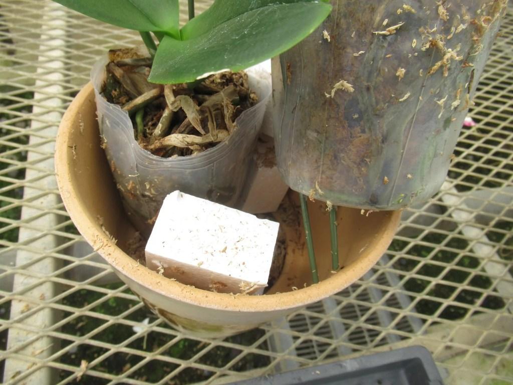 胡蝶蘭と発泡スチロール