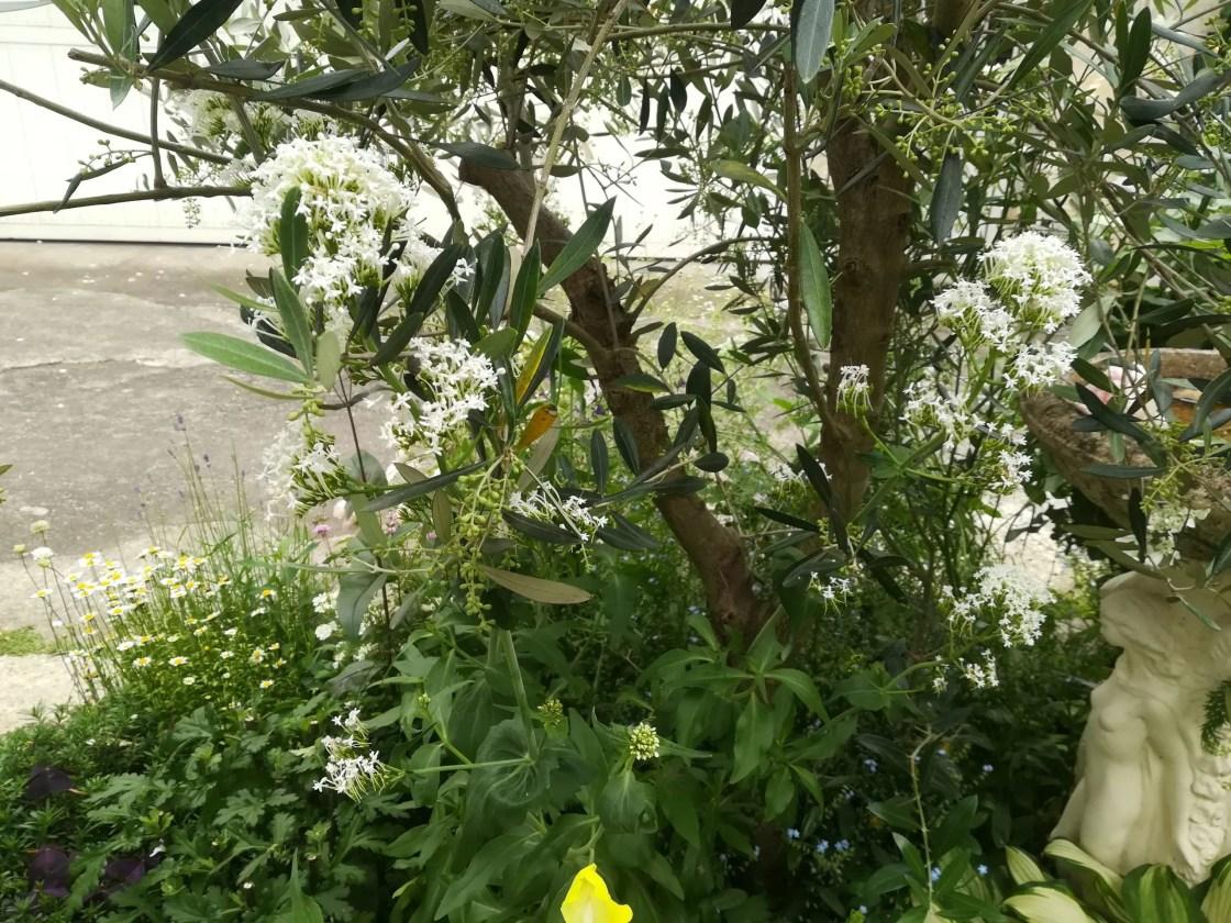 夏に咲く白い花の植栽