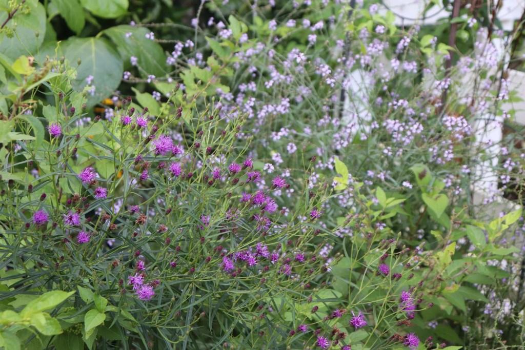 真夏に咲く紫色の花
