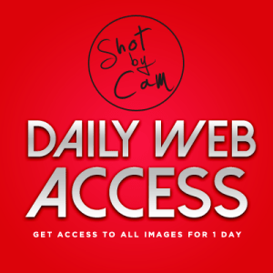 Daily Website Access