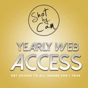 Yearly Website Access