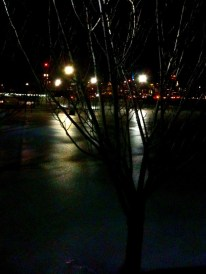 Cold dark reflections : the fields of ice formed due to the winter mix #photo