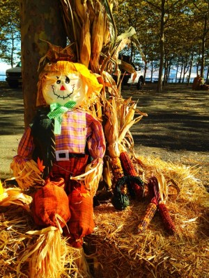 Make HaY when the sun shines, harvest festival #hoboken #iphoneography #photography #fall