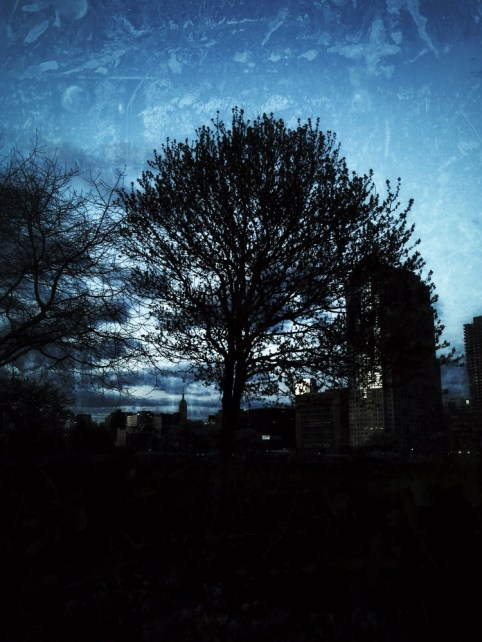 I dreamt of a tree a beautiful tree #iphoneography #photography