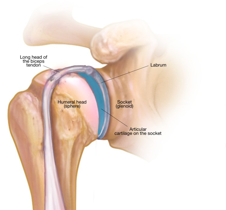 My Shoulder Superior Labrum Is Torn  Do I Need Surgery