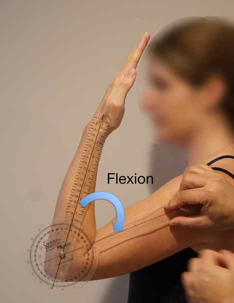 flexion-degrees