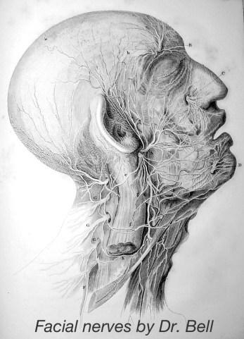 1821, Charles Bell- On The Nerves