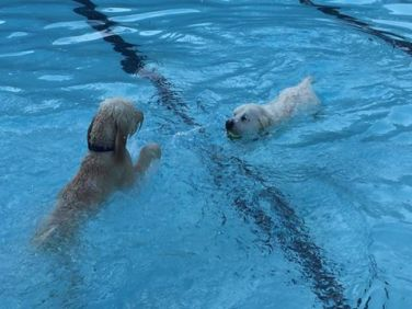 dog-swim