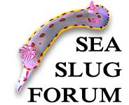 sea slug link picture