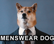 menswear dog link picture