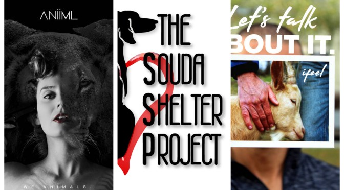3 Animal Rights Albums & 3 Animal Shelters We Recommend