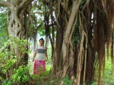 昭和荘スタッフとガジュマルの樹