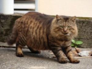 奄美大島南部・古仁屋のネコ