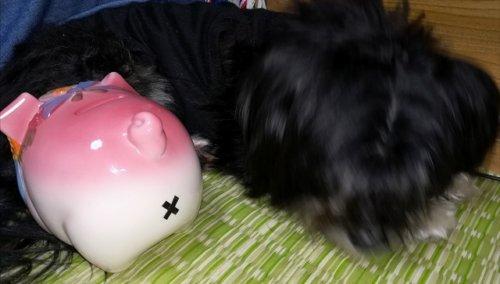 奄美大島のゲストハウス昭和荘の犬