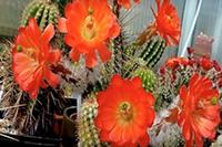 какие цветы должны быть в доме обязательно по народным приметам