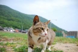 sanagijima_0281