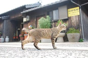 sanagijima_0650