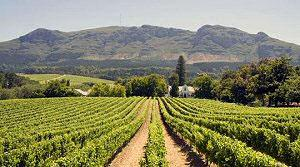 French Huguenot Winemaking in the Cape