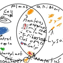 Animal Vs Plant Cell Diagram Subaru Forester Parts Venn Science Biology Cells And