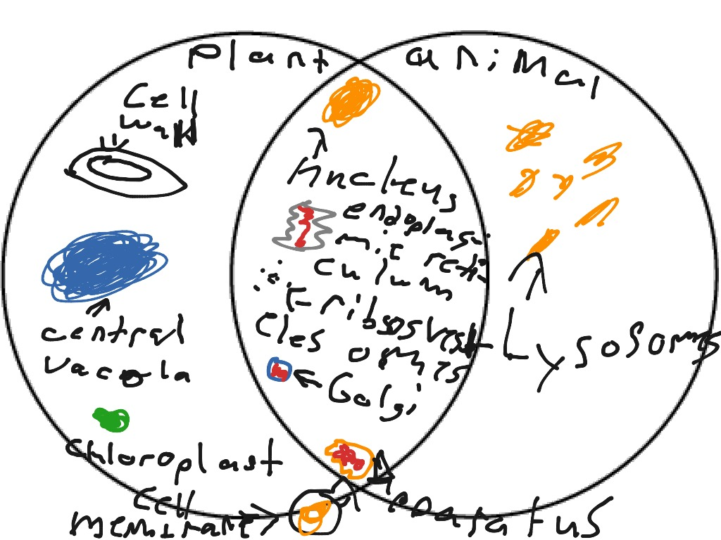 plant cell animal venn diagram pir security light circuit science biology cells and showme