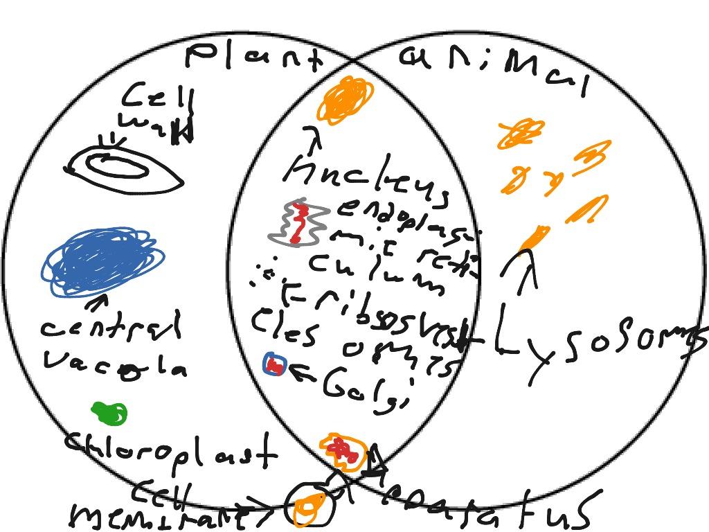 hight resolution of most viewed thumbnail venn diagram