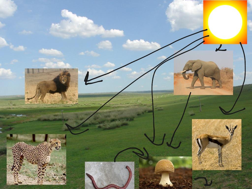 savanna animal food chain diagram 2004 chrysler sebring power window wiring grassland images foodfash co