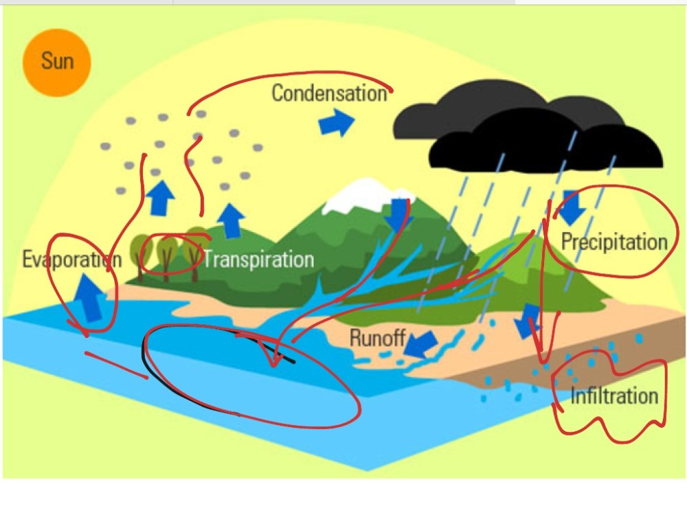medium resolution of diagram for the water cycle